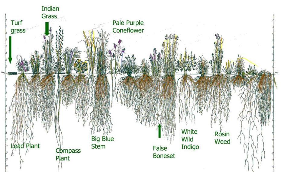 Deep_roots